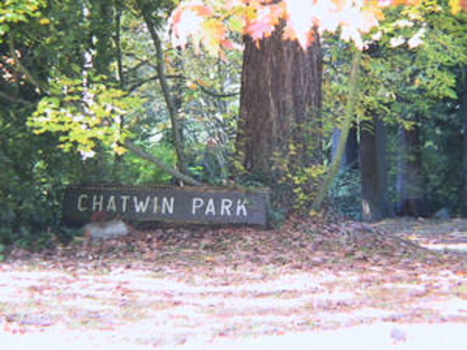 Chatwin Park 2 blocks walk
